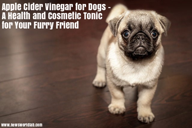 apple-cider-vinegar-for-dogs-a-health-and-cosmetic-tonic-for-your-furry-friend
