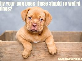 why-your-dog-does-these-stupid-10-weird-things