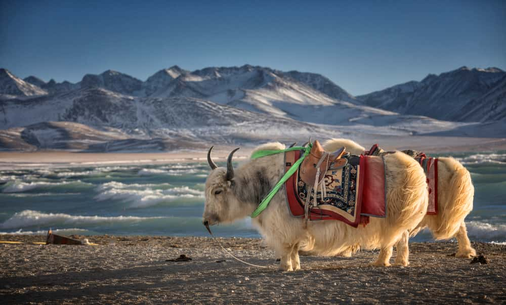 top-5-unique-reasons-to-explore-tibet-and-have-a-great-experience